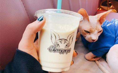 cherry pepsi上海无毛猫咖啡店如何加盟?加盟费要多少?