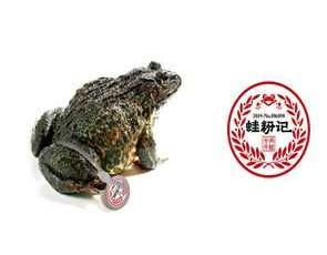 蛙粉记_4